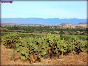 La nopalera. De Huejuquilla El Alto en F