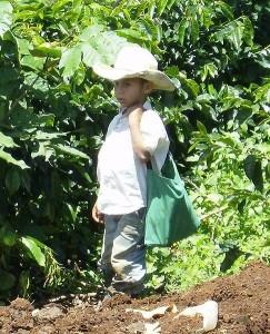 Explotación infantil. Honduras. Wikipedia.